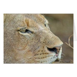Löwin-Gesicht Karte