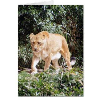 Löwin im Frühjahr Karte