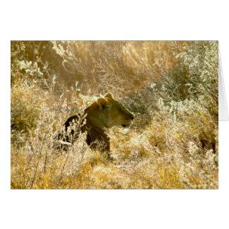 Löwin im Gras Karte