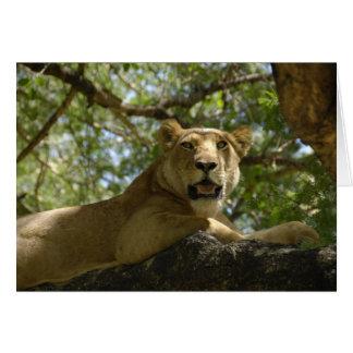 Löwin in der Baum-Foto-Karte Karte