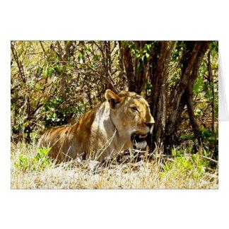 LÖWIN IN KENIA AFRIKA KARTE