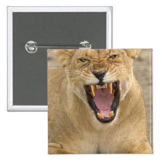 Löwin-Knäuel B, Ostafrika, Tansania, Quadratischer Button 5,1 Cm