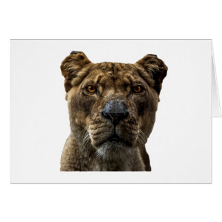 Löwin-Kopf Karte
