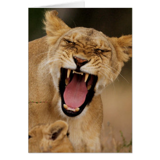 Löwin (Panthera Löwe) knurrend mit CUB Karte