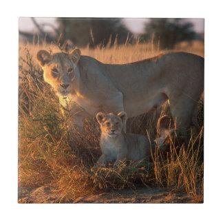 Löwin (Panthera Löwe) und CUB Keramikfliese