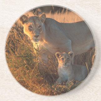 Löwin (Panthera Löwe) und CUB Untersetzer