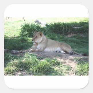 Löwin Quadratischer Aufkleber