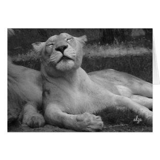 Löwin (Tierwelt 3) Gruß-Karte Karte