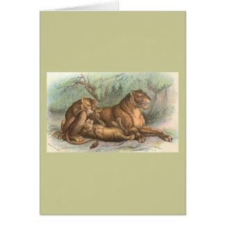 Löwin und CUB, Felis Löwe Karte