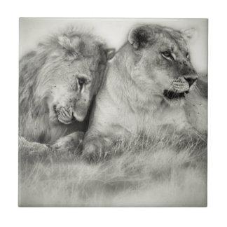 Löwin- und Sohnsitzen und nuzzlingin Botswana Keramikfliese