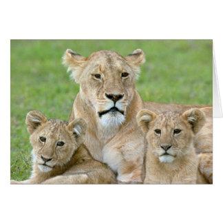 Löwin und zwei CUB, Ostafrika, Tansania, Karte
