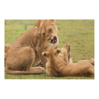 Löwin verwirrt bei CUB Holzwanddeko