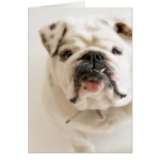 Loyale weiße Bulldoggen-Fotografie Karte