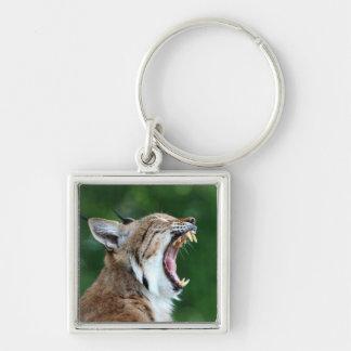 Luchs, schönes keychain Foto des Bobcat Schlüsselanhänger
