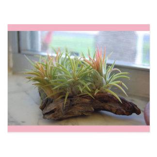 Luft-Pflanzenpostkarte Postkarte