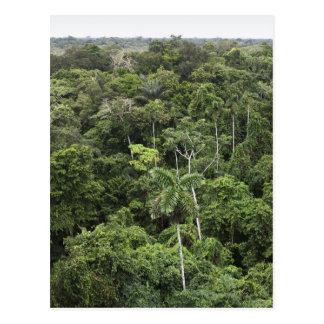Luftaufnahme des Amazonas-Regenwaldes Postkarten