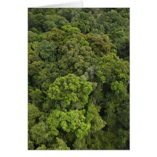 Luftaufnahme des Regenwaldes. Iwokrama Reserve, Karte