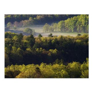 Luftaufnahme des Waldes in Cades Bucht, großes Postkarte