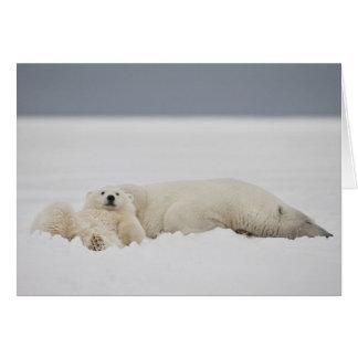 Lügen eines Eisbärjungen im Schnee mit ihm ist Karte