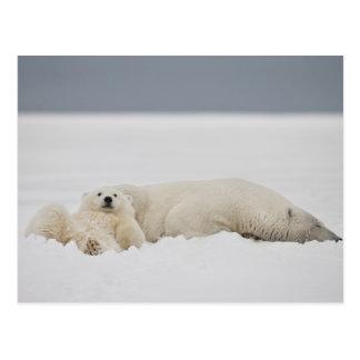 Lügen eines Eisbärjungen im Schnee mit ihm ist Postkarte