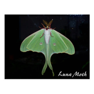 Luna-Motten-Postkarte Postkarte