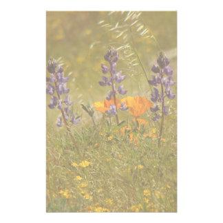 Lupine-Blumen-Wildblumen-Wiesen-Blumenlupine Briefpapier