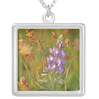 Lupine-u. Grasland-Rauch-Wildblumen in Montana 2 Versilberte Kette