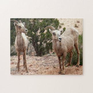 Lustige Bighorn-Schafe an Zion Nationalpark Puzzle