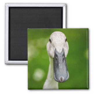Lustige Enten-naher hoher Magnet