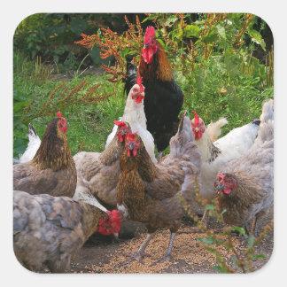 Lustige Hof-Hühner u. Hahn-glatte Aufkleber