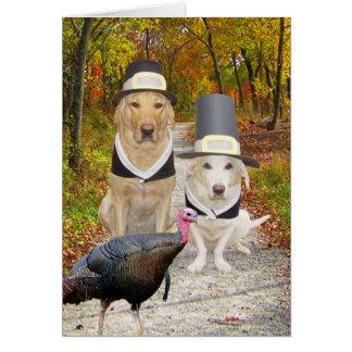 Lustige Hunde/Labrador-Erntedank Karte