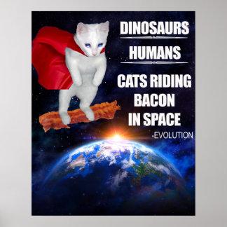 Lustige Katze: Evolution Poster