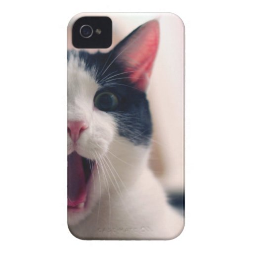 Lustige Katze iPhone 4 Hüllen