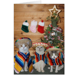 Lustige Katzen/Kätzchen Feliz Navidad Karte