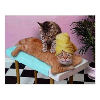 Lustige Katzen-Massage Postkarten