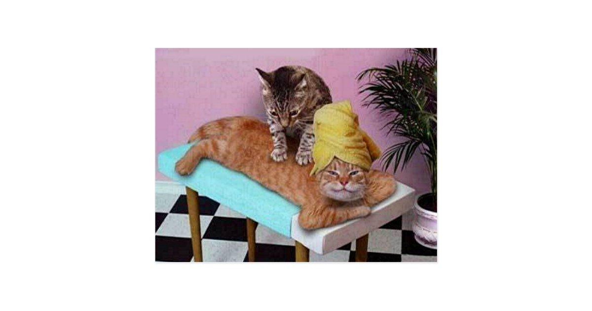 lustige katzen massage postkarten zazzle. Black Bedroom Furniture Sets. Home Design Ideas