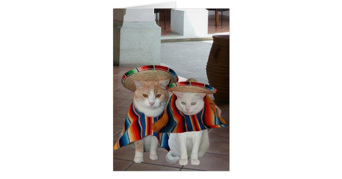 Lustige Katzen Spanischer Geburtstag Fur Ehemann Karte Zazzle