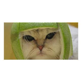 Lustige Katzen-Waren Photo Karten