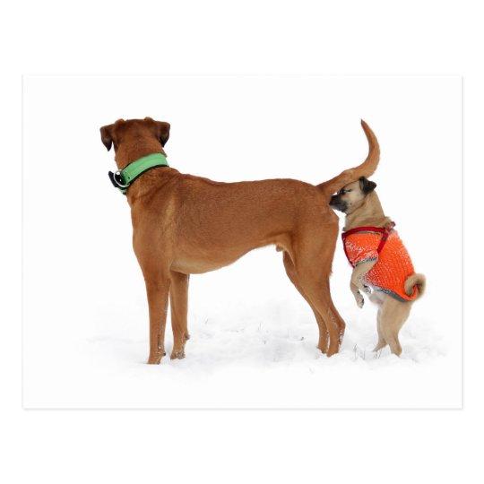 Lustige Kommunikation Geruchssinn Verhalten Hunde Postkarte