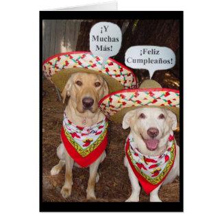 Lustige Labrador-Geburtstags-Karte auf spanisch Karte
