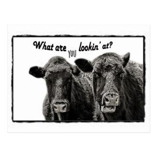 Lustige lustige Kuh-Schwarzweiss-Postkarte Postkarte