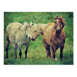 Lustige Pferde Postkarte