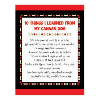 Lustige Sachen I gelernt von meinem Canaan Hund Postkarte
