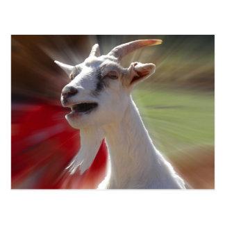 Lustige Tallking Ziegen-Fotografie Postkarte