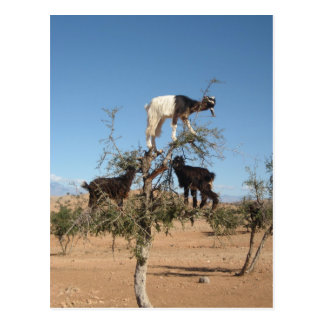 Lustige Ziegen in einem Baum Postkarte