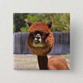 Lustiger Alpaka-Knopf Quadratischer Button 5,1 Cm