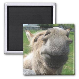 Lustiger Esel-nahes hohes Quadratischer Magnet