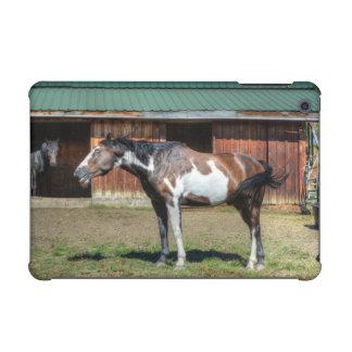 Lustiger Farbepinto-grinsendes Pferd PhotoBomb