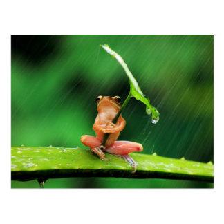 Lustiger Frosch ängstlich vom Wasser Postkarte