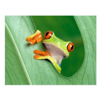 Lustiger Frosch Postkarte